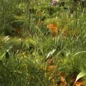Terragen field