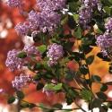 XfrogPlants flowers