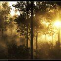 Terragen 2 forest